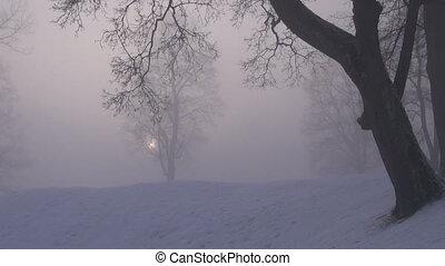 brouillard, parc, hiver, matin