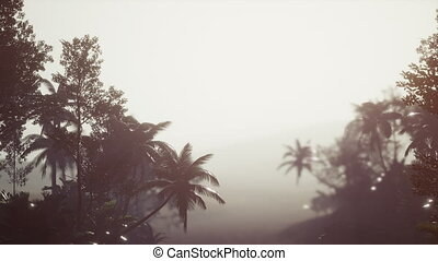 brouillard, paume, rainforest, exotique
