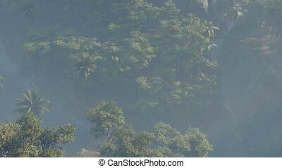 brouillard, paysage, couvert, jungle, rainforest