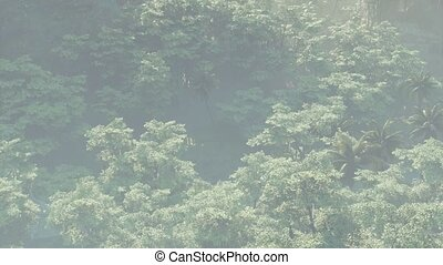 brouillard, paysage, jungle, couvert, rainforest