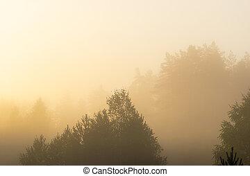 brouillard, pendant, jaune, forêt, levers de soleil, dense, blanc, couvert