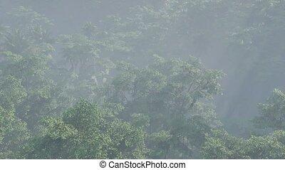brouillard, rainforest, couvert, paysage, jungle