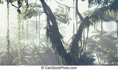 brouillard, rainforest, jungle, brumeux