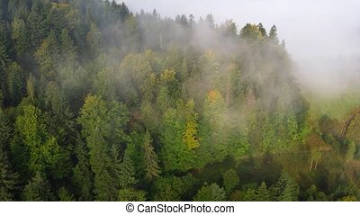 brouillard, ukrainien, sur, levée, timelapse, carpathian, ...