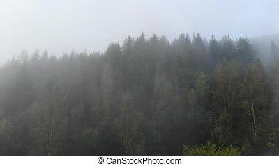 brouillard, ukrainien, sur, voile, carpathian, mince, ...