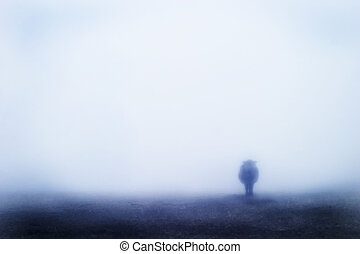 brouillard, vache