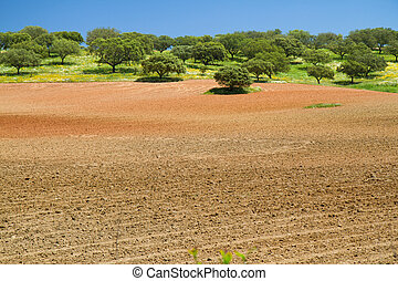 brown agriculture field and blue sky