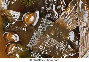 Brown algae - Closeup of several kinds of brown sea algae