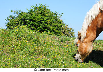 Brown and beige grazing horse against blue sky, shallow depth of field