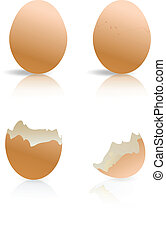 brown and broken egg shells isolated