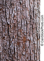 Brown and White Bark Of Tree background