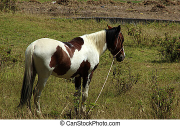 Brown and White Horse in a Meadow