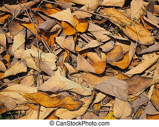 brown autumn dry leaves