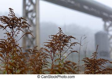 Brown autumn grass in misty urban landscape - Brown...