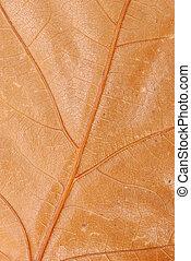Brown autumn leaf texture