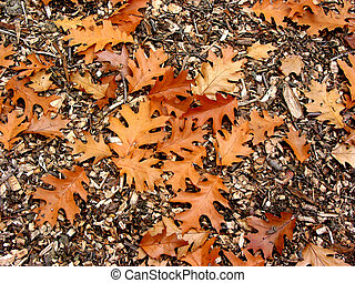 Brown background with oak leaves