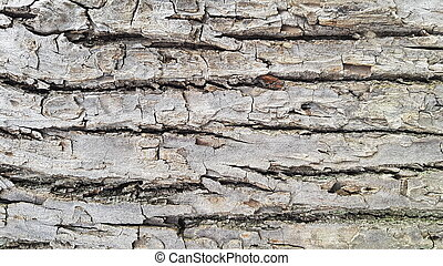 Brown bark wood texture background. Bark texture with natural pattern.