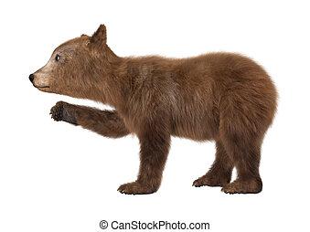 bear cub illustrations and clipart 5 590 bear cub royalty free rh canstockphoto com free bear cub clipart black bear cub clipart