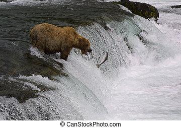 Brown Bear Fishing on Brooks Falls - Katmain National Park