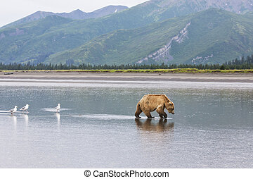 brown bear followed by birds