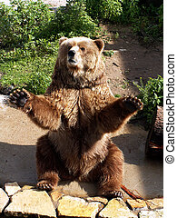 brown bear - funny bear