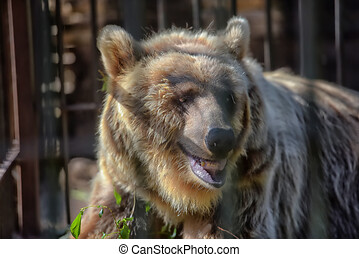 brown bear in a cage in summer