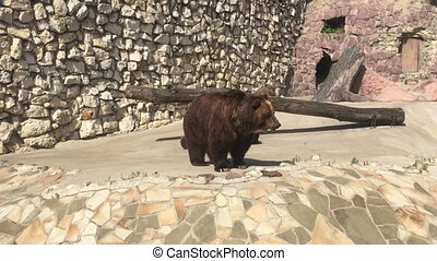 Brown bear in zoo park.