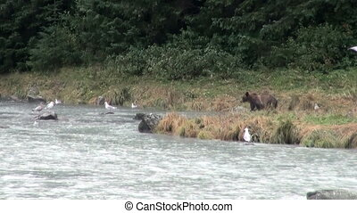 Brown Bear - It Is Time For Lunch!