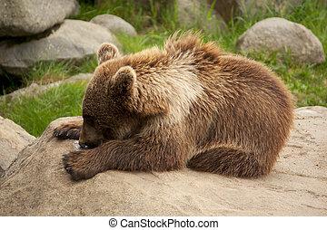 Brown bear lying on a rock