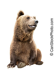 brown bear on a white background