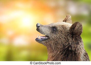 Brown bear on green sunny background