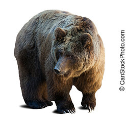 brown bear over white background with shade