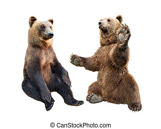 brown bear stands on its hind legs and the second looks