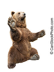 bear stands on its hind legs on a white