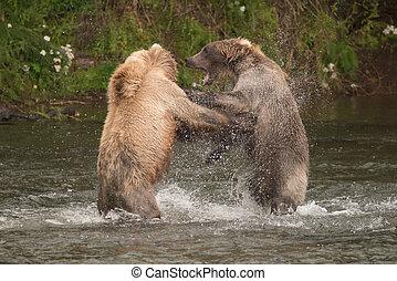 Brown bears fighting in spray of water