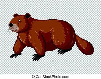 Brown beaver on transparent background