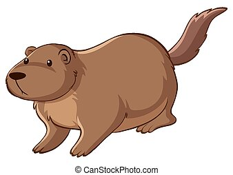 Brown beaver on white background