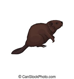 Brown beaver wild forest animal vector Illustration on a white background