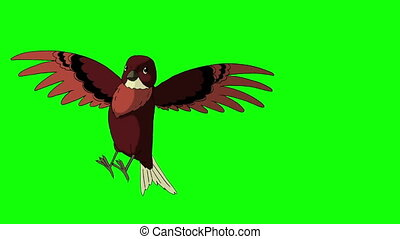 Brown Bird Came Flying. Animated Motion Graphic Isolated on Green Screen.