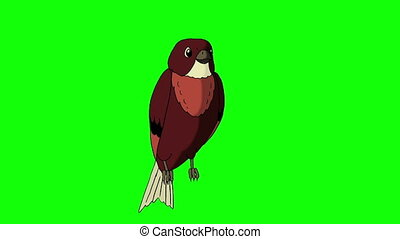 Brown Bird Sitting and Singing. Animated Motion Graphic...