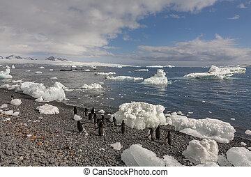 Brown Bluff on the Tabarin Peninsula - Antarctica
