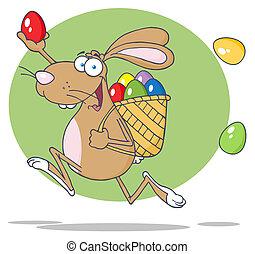 Brown Bunny Participating