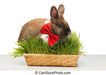 Brown bunny with bow tie sitting in box of grass