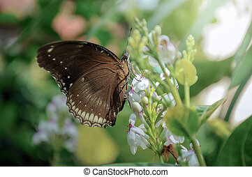 Brown butterfly & flower in the garden