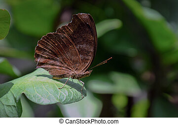 Brown butterfly in the garden