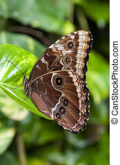 brown butterfly on a green leaf