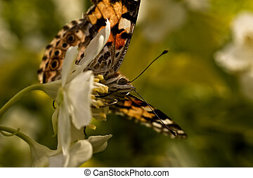 brown butterfly on a white flower close up