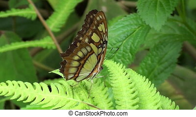 brown butterfly on green fern