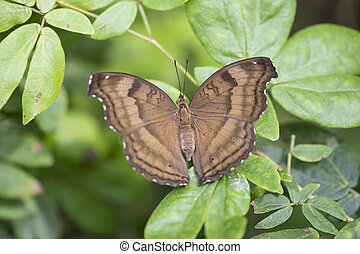 brown butterfly on plant