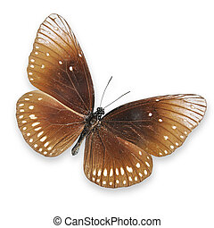 Brown butterfly on white background - Beautiful brown...